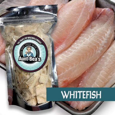 Ocean Whitefish